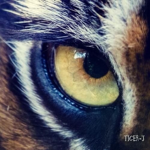 tj_cummings_tiger-j1
